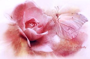 The Rose and Butterfly by ROSASINMAS