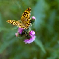 Butterflies and Hurricanes III by 1uno