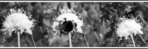 the bumble-bee... by florina23