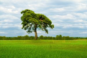 A Pine Tree In A Field by Korolevatumana