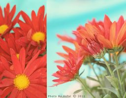 Flower by ANFAL-0