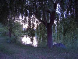 Weeping Willow Stock 1 by SimplyBackgrounds