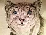 1 YEAR SNOWLEOPARD by OPENINGART