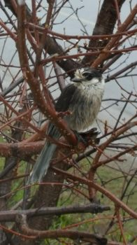 Jay in the Rain by Deltora251