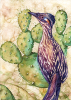 Roadrunner Watercolour by Simkaye
