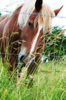 Beautiful Horse by DYWPhotography