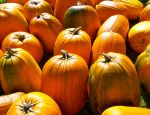 Pumpkins Galore by AverageSmalltownGirl