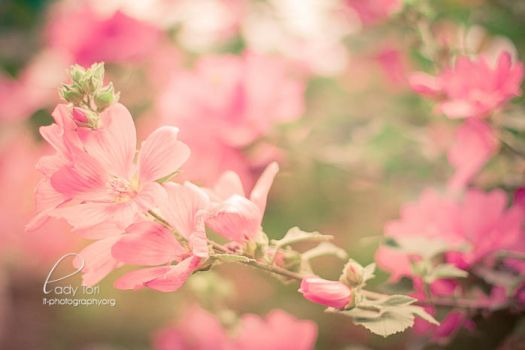 Day Forty-Five - Pink Flowers by Lady-Tori