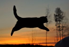 cat flies by rrreetta
