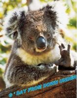 G'Day from down under by Kargroth