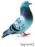 Pigeon by Malyampkin