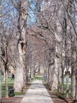 Avenue of Trees by darchiel