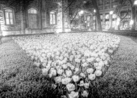 Chicago Water Tower Tulips by spudart