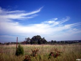 Farmland and Sky by Tiffannie