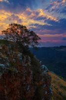 Tree on a Cliff by carlosthe
