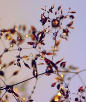 magic droplets by efeline