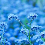 Blue reminiscence by leilani-m