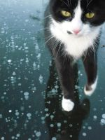 cat on ice by kasiramis