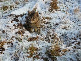 Wild cat in the snow by SallyVan