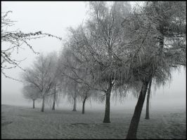 frozen trees by in-my-viewfinder