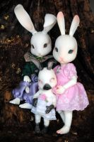 portrait of a bunny family by Umrae-Thara
