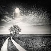 FIELDS 3 by Ssquared-Photography