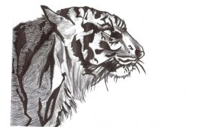 TIGER-PEN DRAWING by DIP-dippie