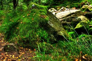 Moss-covered Rock... by TheBaldingOne