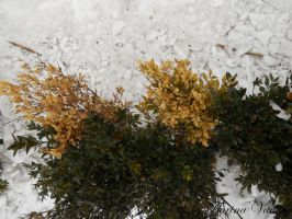 green and yelowplants and snow by florina23