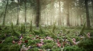 Forest Ferny Floor by Lightartistry