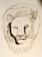Lion by Chequer