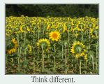 Think different by mdt