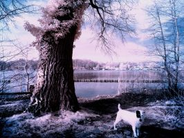 Little Dog infrared by MichiLauke