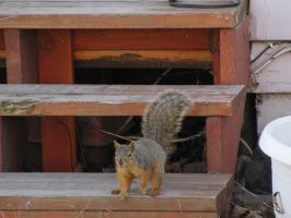 Squirrel Exclamation Mark by Cyberpriest