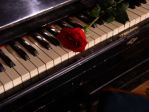 Piano and rose by tener-stock
