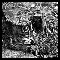 Stump by CharliePhotos