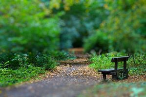 Bench Tilt Shift Attempt by stphq
