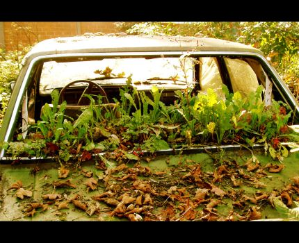 Plants in the Car by Nullitey