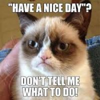 Grumpy Cat Meme 7 by jinxxnixx