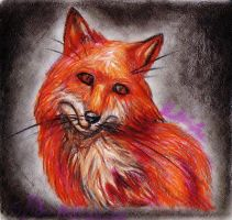 001-Red Fox Realism Headshot Study by SpiderMilkshake