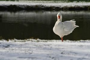 Cold feet by mkuegler