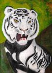 Such eyes for a white tiger... by AbbyGaby005