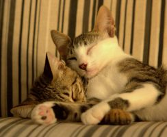 Brotherly Love 2 by cathy001