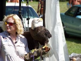 Bald Eagle by piercedpinup