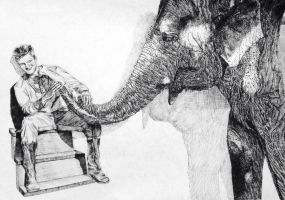 elephant by artisticendeavours
