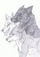 Jacob Black and His Pack by PawstepsOfBlood