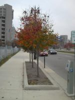 Downtown Tree by timelike01