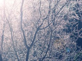 The Winter Blues by Morna