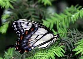 June Butterfly 02 by andras120