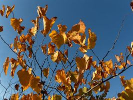 Autumn leaves by voider00